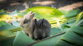 Молодой кролик есть листья в саде Стоковые Изображения