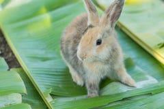 Молодой кролик есть листья в саде Стоковая Фотография