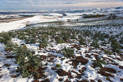 Молодой ландшафт гор снежка урожая вала Стоковое фото RF
