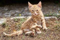 Молодой любопытный кот стоковое изображение