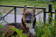 Молодой напористый щенок на прогулке стоковая фотография rf