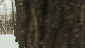 Молодой парень в черных одеждах и балаклаве спорт, выполняя подогрев перед тренировкой в городе зимы покрытом снег сток-видео