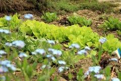Молодой салат стоковые фото