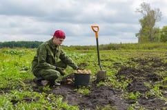 Молодой фермер жать картошки Стоковые Фотографии RF