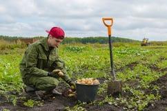 Молодой фермер жать картошки Стоковое Изображение RF