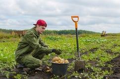 Молодой фермер жать картошки Стоковое Фото