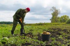 Молодой фермер жать картошки Стоковые Изображения