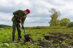 Молодой фермер жать картошки Стоковая Фотография RF