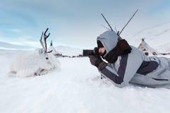 Молодой фотограф снимает белого и милого оленя лежа на снеге холод очень Россия, Сибирь, Yamal Стоковые Фото
