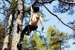 Молодой человек взбираясь на дереве с веревочкой Стоковая Фотография