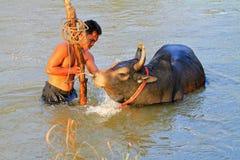 Молодой человек дает ванну к его скотинам Стоковое Изображение RF