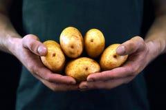 Молодой человек держа желтые картошки Стоковая Фотография