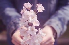 Молодой человек держа пук розовых цветков в ее руках Стоковые Изображения