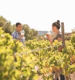 Молодой человек и женщина в винограднике Стоковые Фото