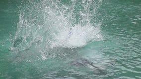 Молодой человек скача к бассейну, супер замедленному движению акции видеоматериалы