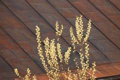 Молодые бутоны вербы весны освещенные лучами солнца на фоне ржавой крыши дома схематическо стоковое изображение