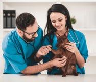 Молодые ветеринары в клинике ветеринара Стоковые Изображения