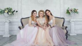 Молодые взрослые девушки сидят в платьях пинка и пурпура и смотрят камеру акции видеоматериалы