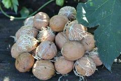 Молодые грецкие орехи на таблице стоковое фото rf