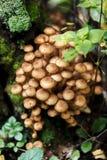 Молодые грибы растя на дереве Стоковое Изображение RF