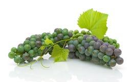 Молодые группы виноградин с листьями на белизне Стоковое фото RF
