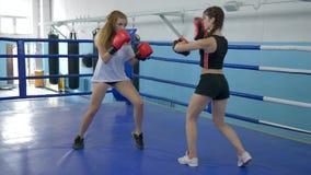 Молодые женщины спорт тренируют вкратце шорты в спортзале, дуновениях взятий девушки на лапках бокса сильной женщины в gloved на  сток-видео