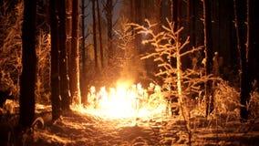 Молодые люди в лесе зимы сидя огнем, добавляющ accelerants огня и костер взрывают сток-видео