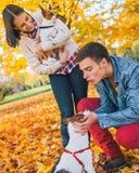 Молодые пары играя с собаками outdoors в осени Стоковое Изображение RF