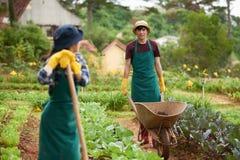 Молодые работники на огороде Стоковая Фотография RF