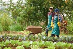 Молодые садовники беседуя оживленно Стоковое Изображение RF