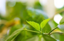 Молодые свежие листья зеленого цвета стоковое фото rf