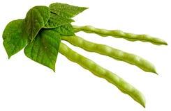 Молодые стручки фасоли с листьями стоковое фото rf