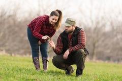 Молодые фермеры examing засаженная молодая пшеница во время зимы приправляют Стоковые Изображения