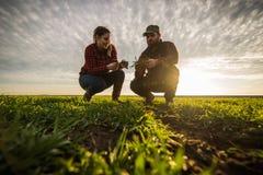 Молодые фермеры examing засаженная молодая пшеница во время зимы приправляют Стоковое Изображение RF