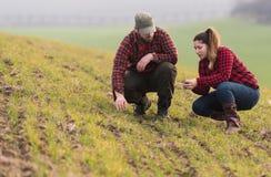Молодые фермеры examing засаженная молодая пшеница во время зимы приправляют Стоковое фото RF