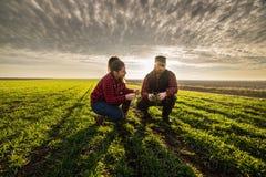 Молодые фермеры examing засаженная молодая пшеница во время зимы приправляют Стоковая Фотография