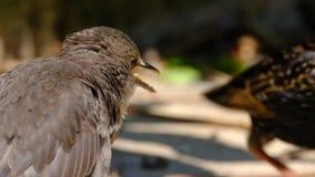 Молодые starlings в городском саде дома акции видеоматериалы