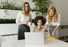 3 молодых коммерсантки в офисе Стоковое Фото