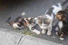 3 молодых милых котят играя внутри Стоковое Фото