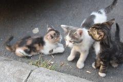 3 молодых милых котят играя внутри Стоковые Изображения