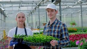 2 молодых фермера, agronomist или флорист в рубашке и рисберме работы шотландки держат зеленые растения на заднем плане акции видеоматериалы