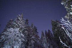 Молокозавод Звездный путь в древесинах зимы стоковое фото rf