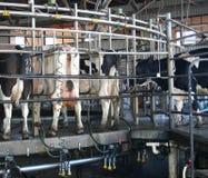 молокозавод роторный стоковые фото