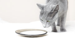 молоко кота стоковое изображение
