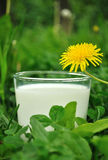 молоко Стоковые Изображения RF