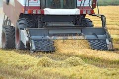 Молотить риса собрания склоняя Сбор сельскохозяйственной техники на поле Стоковое Фото