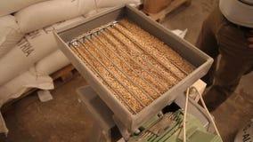 Молоть солода для производить пиво на винзаводе Задавливать солода в электрической мельнице конец вверх видеоматериал