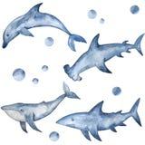 Молот, акула, дельфин и кит акварели Рука покрасила подводных жителей иллюстрация вектора