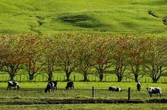 Молочная ферма стоковое фото rf