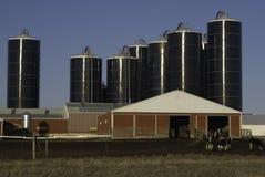 молочная ферма Стоковая Фотография RF